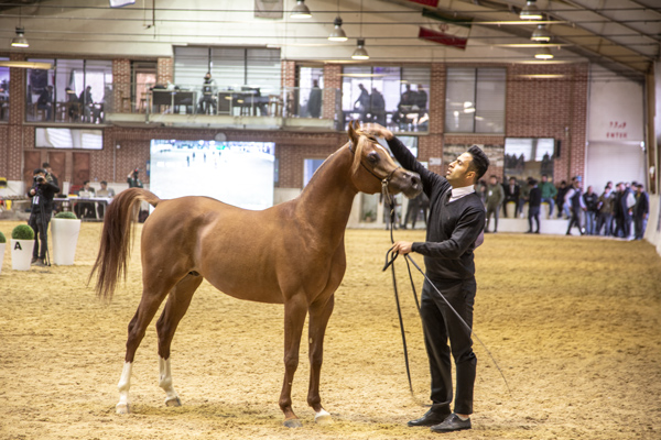 public://news/Bshow-horse-1.jpg